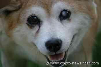 KuCoin und Binance listen Shiba Inu, das Token erreicht ATH - Crypto News Flash