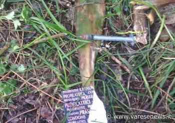 Gorla Minore 41enne di Fagnano Olona morto nei boschi della droga di Gorla Minore, ipotesi overdose - varesenews.it