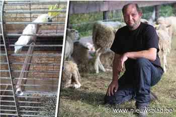 Pastoor uit Montenaken dreigt wapen boven te halen tijdens inbeslagname huisdieren
