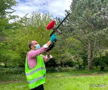 A Chartres, le paintball, cette arme fatale contre les chenilles processionnaires du pin - actu.fr