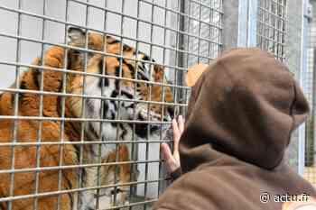 Près de Chartres, le zoo-refuge La Tanière, lieu unique en France, ouvrira ses portes dans un mois - actu.fr