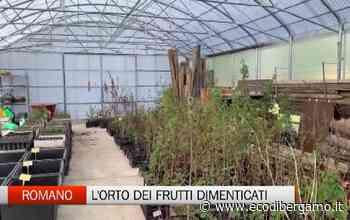 Romano di Lombardia: ecco il misterioso giardino dei frutti dimenticati - L'Eco di Bergamo