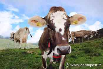 Alto Garda Bresciano, un bando a sostegno dell'agricoltura di montagna - gardapost