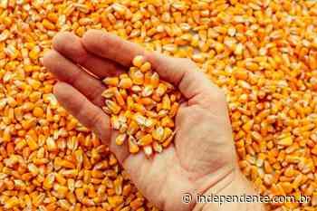 Prefeitura de Vespasiano Corrêa recebe pedidos de milho a partir desta segunda-feira - independente