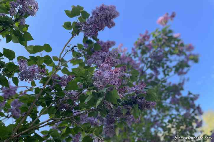 Letter from Vermont: Stop and smell the lilacs