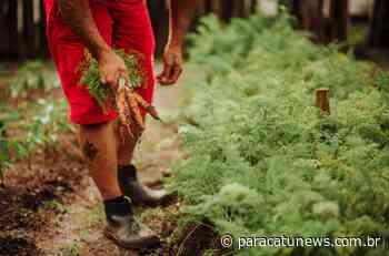 GeralDo presídio para a mesa: horta em Caratinga produz 1 tonelada de alimentos por mês - Paracatunews