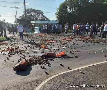 Productores de Natá tiran cebollas a la vía por incumplimiento de Gobierno - Crítica Panamá