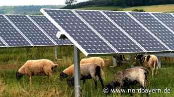 Wolf reißt trächtige Schafe in Solarpark bei Parsberg - Nordbayern.de