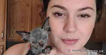 Pet kitten thought to be 'sick' turns out to be incredibly rare wolf-cat