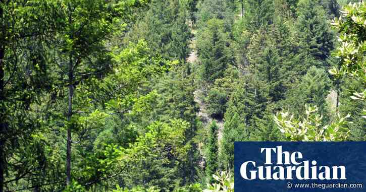 Forest the size of France regrown worldwide over 20 years, study finds