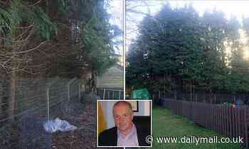 Couple win battle to keep their 62ft leylandii hedge after neighbour blamed it for ruining his crop