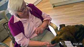 Emma fährt sogar alleine Fahrstuhl: Straßenhund im Corona-Kuscheleinsatz im Seniorenheim in Dissen - noz.de - Neue Osnabrücker Zeitung