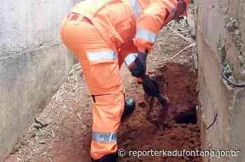 Bombeiros resgatam filhotes em buraco após cadela dar a luz em Leopoldina. - reporterkadufontana.jor.br - Reporter Kadu Fontana