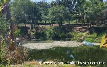 [Video] Río Viejo Mezcalapa, un río de peces muertos - El Heraldo de Tabasco
