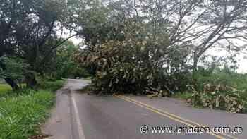 Árboles caídos en la vía Neiva-Campoalegre • La Nación - La Nación.com.co