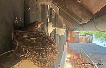 Vogel-Eigenheim mit grandiosem Seeblick - Tittmoning - Passauer Neue Presse