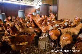 Un foyer d'influenza aviaire dans une basse-cour près de Rethel - L'Ardennais