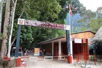 ¡Buenas noticias! Parque Nacional Tingo María recibe sello internacional Safe Travels - El Peruano