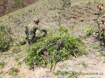 Tres fallecidos en campo minado en zona rural de Puerto Caicedo - http://www.radionacional.co/