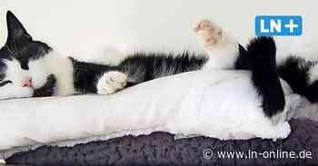 Cat-Content aus Ratekau: Ostholsteinerin gibt Katzenhaltern Tipps - Lübecker Nachrichten