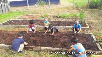 Crianças da escola do Santa Maria cultivam horta comunitária e se alimentam com as verduras produzidas - Solutudo - Solutudo - A Cidade em Detalhes