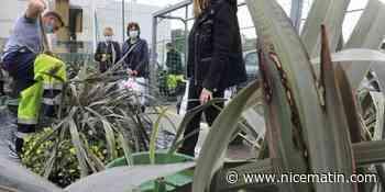À Cagnes-sur-Mer, des plantes pour garnir vos jardinières
