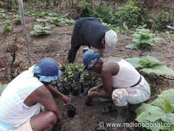 Mujeres víctimas del conflicto en Bagadó, Chocó, le apuestan a la paz cultivando - http://www.radionacional.co/