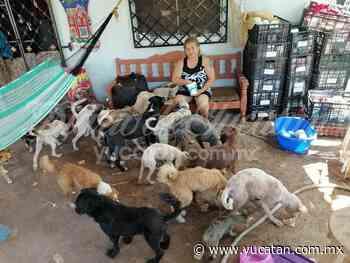 Estancia canina de Ticul pide ayuda a la ciudadanía - El Diario de Yucatán