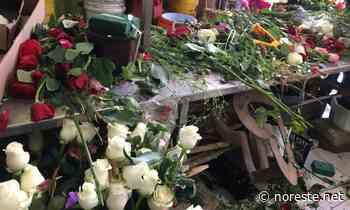 Precio de las rosas por los cielos este 10 de mayo en Poza Rica - NORESTE