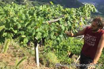 """Gian Marco Viano, il viticoltore del futuro: """"L'identità è la chiave del successo"""" - Fine Dining Lovers Italia"""