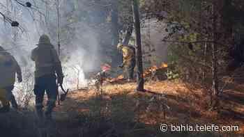 Monte Hermoso: importante incendio forestal en Sauce Grande - Telefe Bahia Blanca