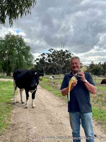 End of an era at Bacchus Marsh bull farm - Dairy News Australia