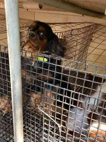 Missouri tops the 'Horrible Hundred' puppy mill report yet again. Missouri dog breeders are pushing back.