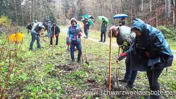 Nachhaltigkeit in Geislingen - Neue Periode der Waldpflege beginnt ab 2022 - Schwarzwälder Bote