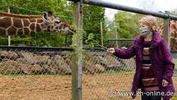 Erste britische Corona-Impfpatientin trifft nach ihr benannte Giraffe