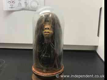 Prop 'Amazon chief' shrunken head at Georgia university revealed to be real human head