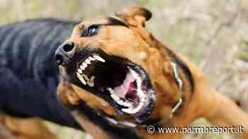 Fidenza: cane rincorre e azzanna una ragazza al braccio - parmareport.it