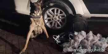 Cão Fuzil localiza 13 quilos de drogas em Ferraz de Vasconcelos - O Diário