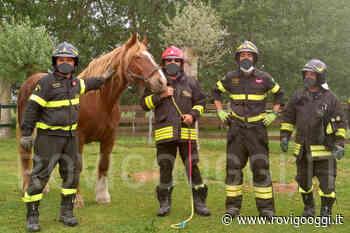 Cavalla salvata dai Pompieri di Rovigo - RovigoOggi.it