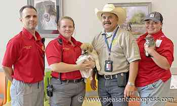 Animal Control reports no animals euthanized for space in past year - Pleasanton Express