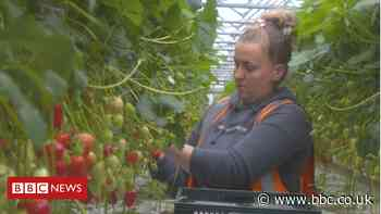 Scottish fruit farmers' fears over shortage of migrant workers