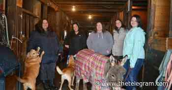 Grand Falls-Windsor initiative pairs people with horses for mental wellness | The Telegram - The Telegram