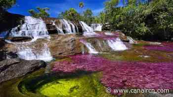 Conoce Caño Cristales 'el rio más lindo del mundo' ¡Está en Colombia! - Canal RCN