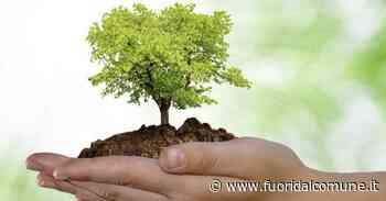 """Melzo, un nuovo bosco grazie al progetto """"Forestami"""" - Fuoridalcomune.it"""