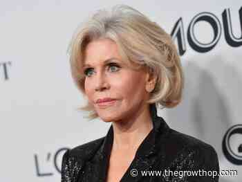 'Munchies' and a lack of focus stopped Jane Fonda from becoming a stoner - The GrowthOp
