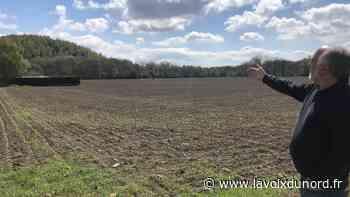 Projet immobilier sur des champs bios à Carvin : coup de gueule des anciens de la rue des Hirondelles - La Voix du Nord
