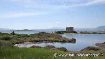 Olbia: terreni tutelati di Sa Testa al Cipnes, il Grig invia gli atti alla Procura - La Nuova Sardegna