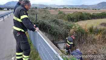 Olbia, bomba nei terreni delle vasche di laminazione: padre e figlio a processo - La Nuova Sardegna