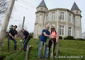 Bizanos : les vignerons sont à l'œuvre à Franqueville - Sud Ouest