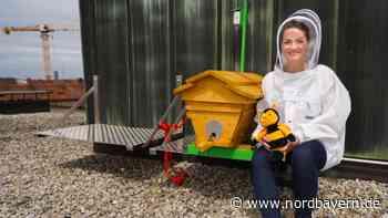 Zukunftsprojekt: Bienen sollen Naturkatastrophen vorhersagen - Nordbayern.de